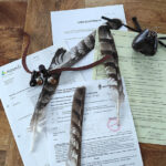 Metsästyshaukan hankinta ja 1. vuosi kanahaukan kanssa