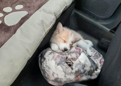 Nata nukkuu auton lattialla