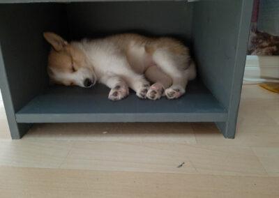 Nata nukkuu hyllyllä
