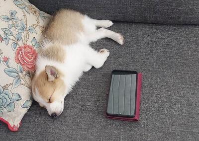 Nata nukkuu sohvalla